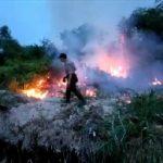Lahan Gambut Milik PT. IPS Hangus Terbakar